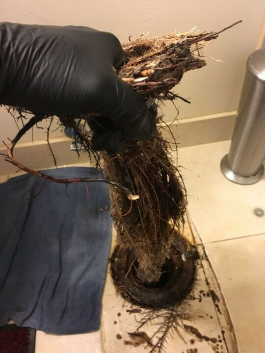 This toilet clogged by roots is very common in San Diego!